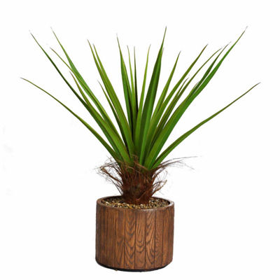 49 Inch Tall Agave Plant With Cocoa Skin In 16 Inch Faux-Wood Planter