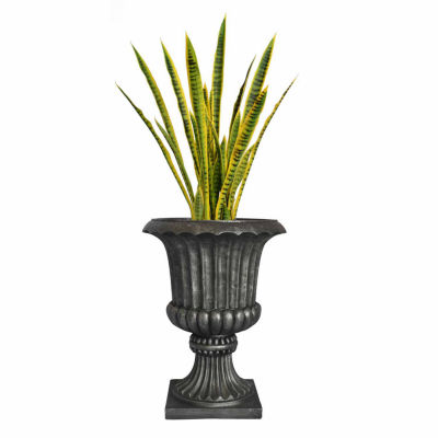 49 Inch Tall Snake Plant In Urn Planter