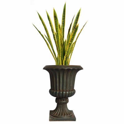 49 Inch Tall Snake Plant In Rustic Urn Planter