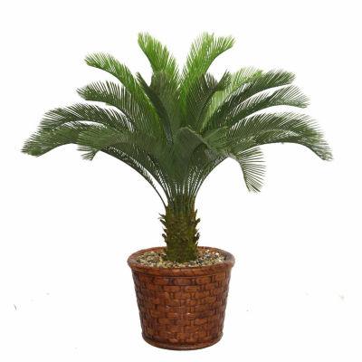 Laura Ashley 53 Inch Tall Cycas Palm Tree In 17 Inch Fiberstone Planter