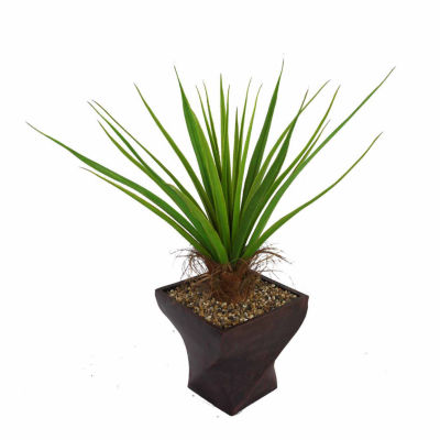 54 Inch Tall Agave Plant With Cocoa Skin In 17 Inch Planter