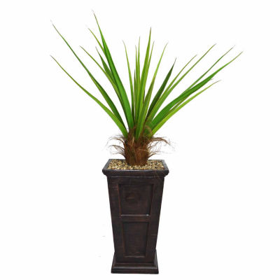 63 Inch Tall Agave Plant With Cocoa Skin In 16 Inch Traditional Planter