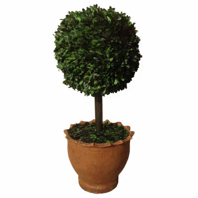 """Laura Ashley 29"""" Tall Preserved Boxwood Ball In Clay Pot"""
