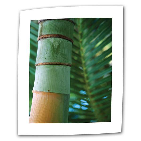 Brushstone Bamboo and Fern Canvas Wall Art