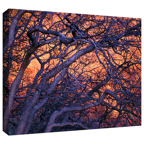 Brushstone Black Oak Sunset Gallery Wrapped CanvasWall Art