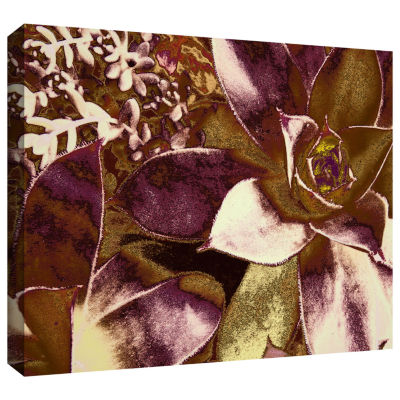 Brushstone Succulent Study Gallery Wrapped CanvasWall Art