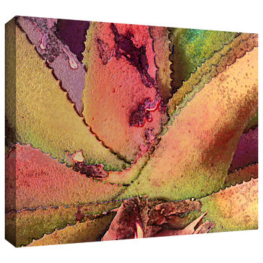 Brushstone Texturas Suculentas Gallery Wrapped Canvas Wall Art