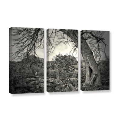 Brushstone Listen To Whispers 3-pc. Gallery Wrapped Canvas Wall Art