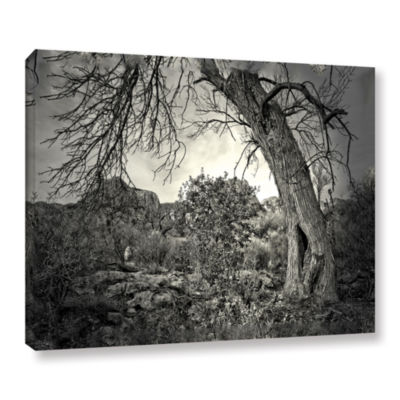 Brushstone Listen To Whispers Gallery Wrapped Canvas Wall Art