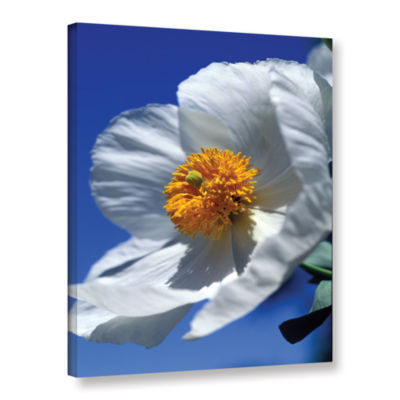 Brushstone Matilija Poppy Gallery Wrapped Canvas Wall Art