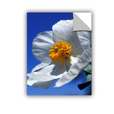 Brushstone Matilija Poppy Removable Wall Decal