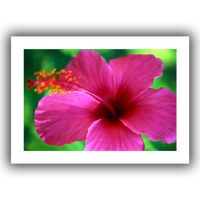 Brushstone Maui Pink Hibiscus Canvas Wall Art