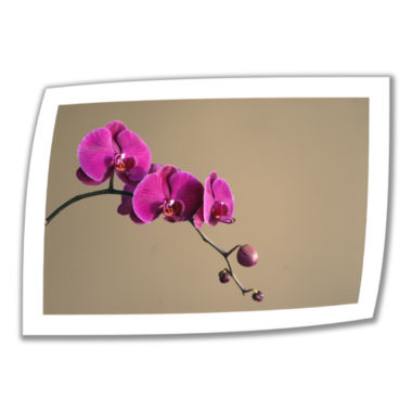 Brushstone Magenta Orchid Canvas Wall Art