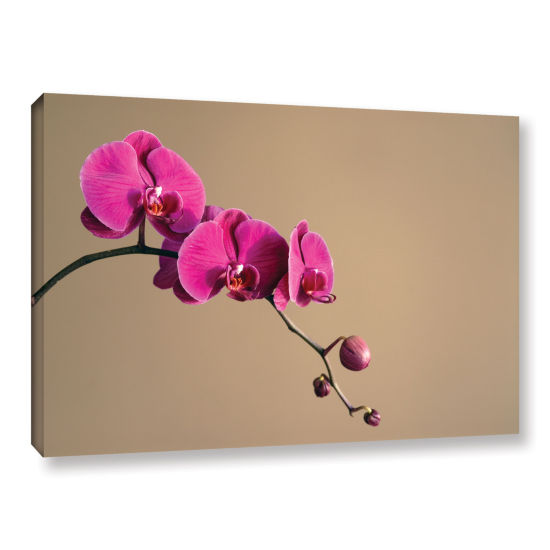 Brushstone Magenta Orchid Gallery Wrapped Canvas Wall Art