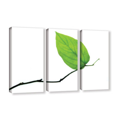 Brushstone Lone Leaf 3-pc. Gallery Wrapped CanvasWall Art