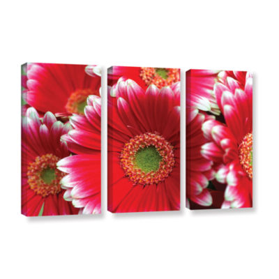 Brushstone Lots A Daisies 3-pc. Gallery Wrapped Canvas Wall Art