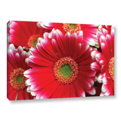 Brushstone Lots A Daisies Gallery Wrapped Canvas Wall Art