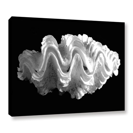 Brushstone Giant Frilled Clam Seashell Tridacna Squamosa Gallery Wrapped Canvas