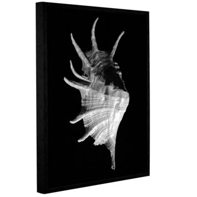 Brushstone Giant Spider Conch Seashell -Lambis Truncata Gallery Wrapped Floater-Framed Canvas