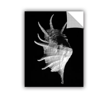 Brushstone Giant Spider Conch Seashell -Lambis Truncata Removable Wall Decal