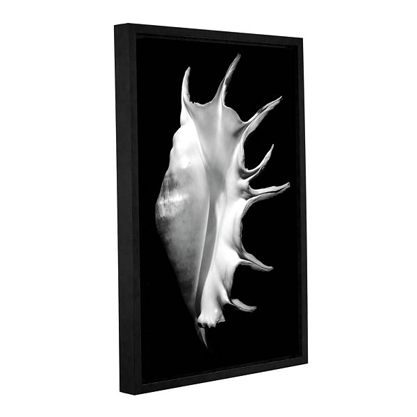 Brushstone Giant Spider Conch Seashell -Lambis-Truncata Gallery Wrapped Floater-Framed Canvas
