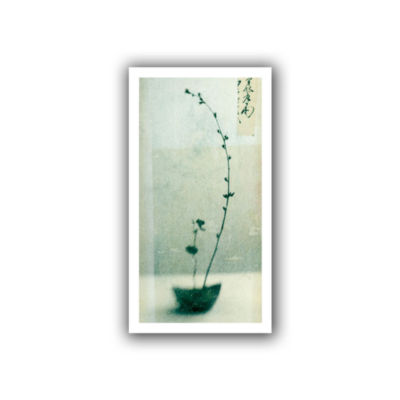 Brushstone Ikebana Canvas Wall Art