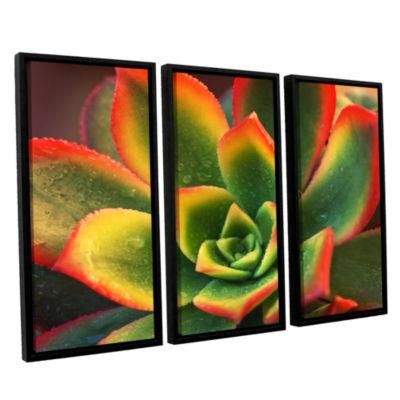Brushstone Succulent 3-pc. Floater Framed Canvas Wall Art