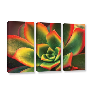 Brushstone Succulent 3-pc. Gallery Wrapped CanvasWall Art