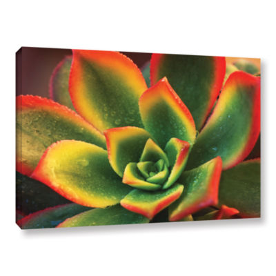 Brushstone Succulent Gallery Wrapped Canvas Wall Art
