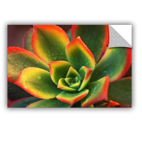 Brushstone Succulent Removable Wall Decal