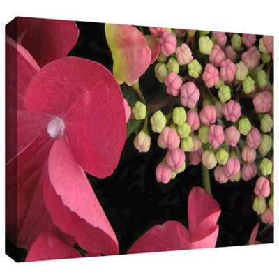 Brushstone Hydrangea Study Gallery Wrapped CanvasWall Art