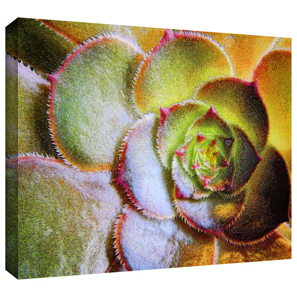 Brushstone Punto Belleza Gallery Wrapped Canvas Wall Art