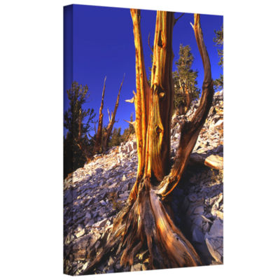 Brushstone White Mountains Afternoon Gallery Wrapped Canvas Wall Art