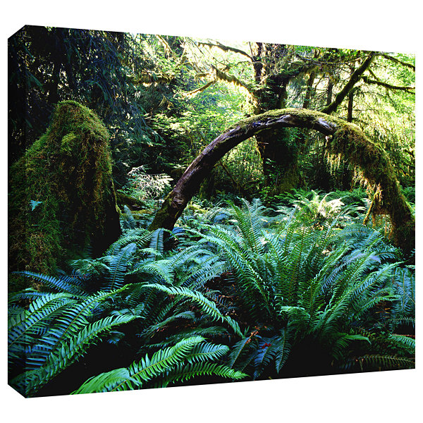 Brushstone Rain Forest Afternoon Gallery Wrapped Canvas Wall Art