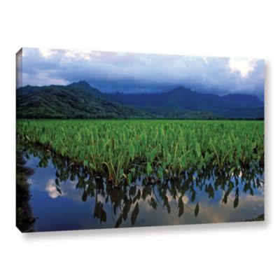 Brushstone Kauai Taro Field Gallery Wrapped CanvasWall Art