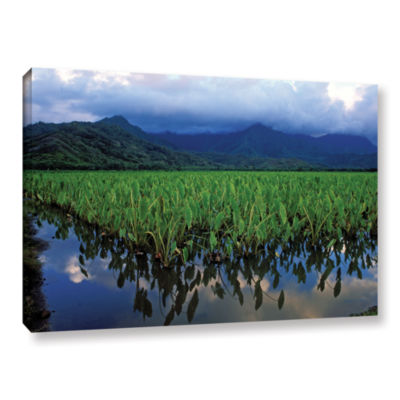 Brushstone Kauai Taro Field Gallery Wrapped CanvasWall Art