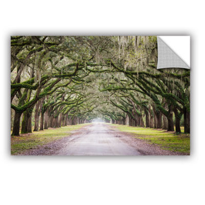 Brushstone Oak Trees With Spanish Moss In SavannaGeorgia Removable Wall Decal