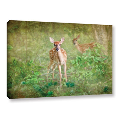 Brushstone Leering Doe Gallery Wrapped Canvas WallArt