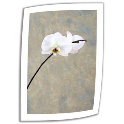 Brushstone Orchid Blossoms Canvas Wall Art