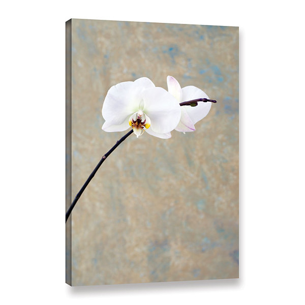 Brushstone Orchid Blossoms Gallery Wrapped CanvasWall Art