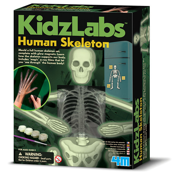 4M Glow Human Skeleton Science Kit