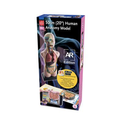 "Edu Toys 20"" Human Anatomy S.R. Version"""