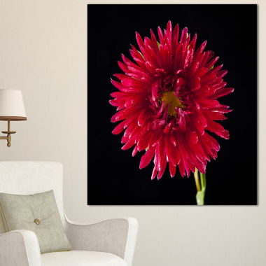 Designart Chrysanthemum Flower On Black Flowers Canvas Wall Artwork