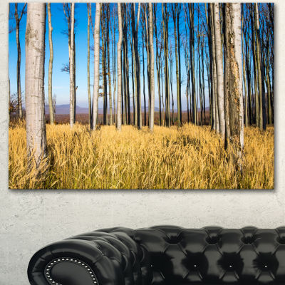 Designart Clear Sky And Bush In Thick Forest Modern Forest Canvas Art - 3 Panels