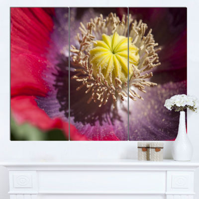 Designart Colorful Opium Poppy Flower Photo Flowers Canvas Wall Artwork - 3 Panels