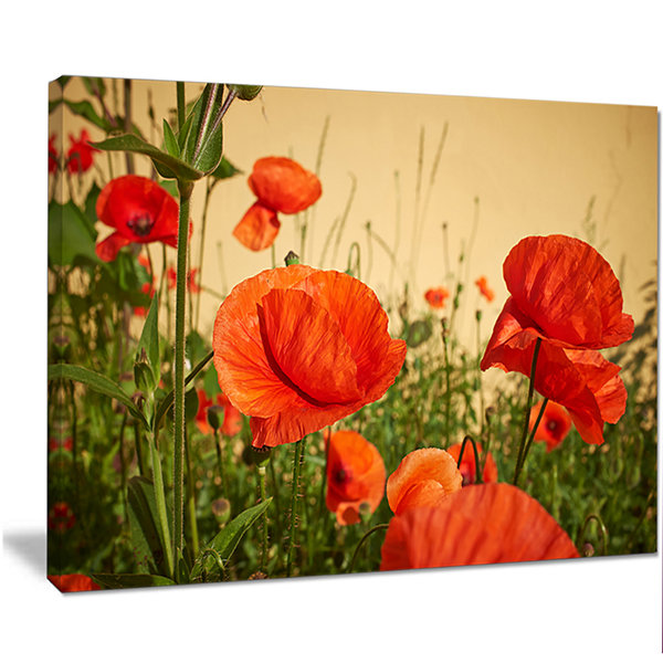 Designart Colorful Red Poppy Flower Field FlowerArtwork On Canvas