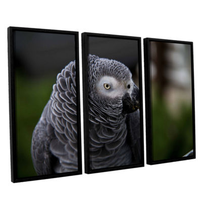 Brushstone Parrot 3-pc. Floater Framed Canvas WallArt