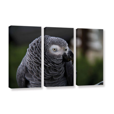 Brushstone Parrot 3-pc. Gallery Wrapped Canvas Wall Art