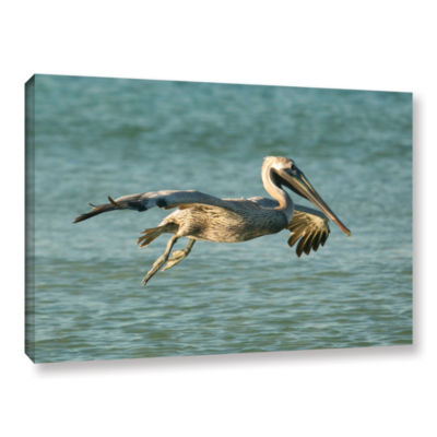 Brushstone Pelican11A Gallery Wrapped Canvas WallArt