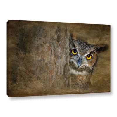 Brushstone Peeping Owl Gallery Wrapped Canvas WallArt